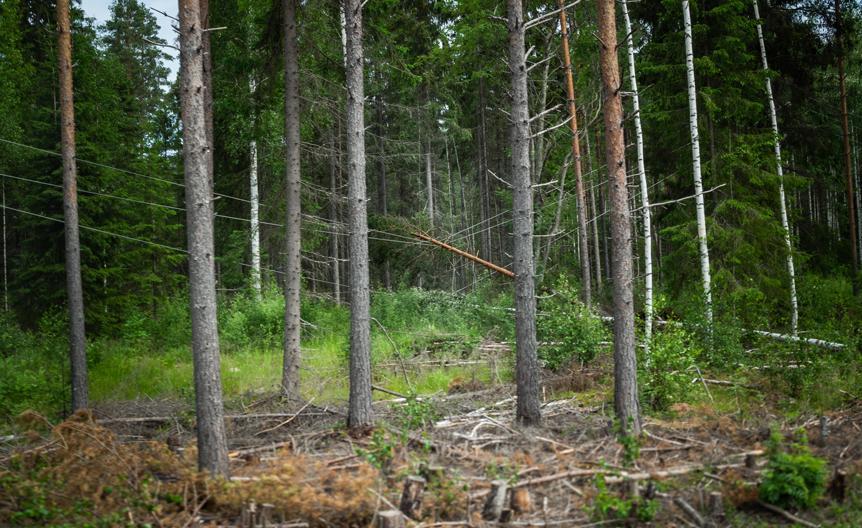 Myrskyn tuhoama metsä ja sähkölinja