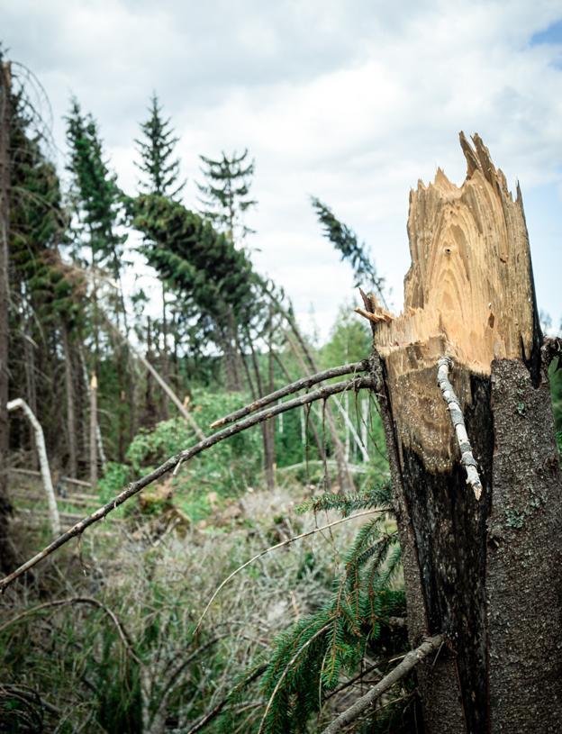 Katkennut puun runko